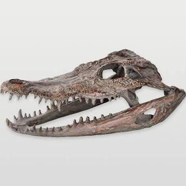 STA380 Crocodylus niloticus statue Polyresin Statue in
