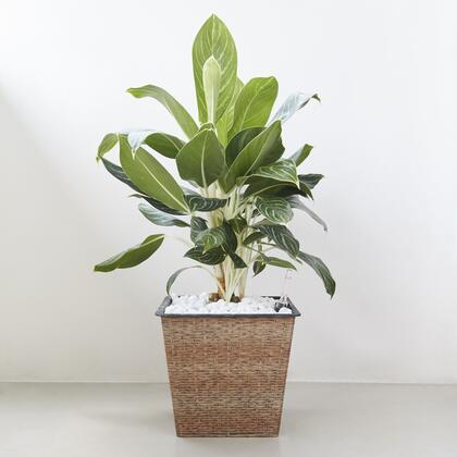 Vifah Hatteras V1903 Planters and Flower Shelf Brown, Main Image