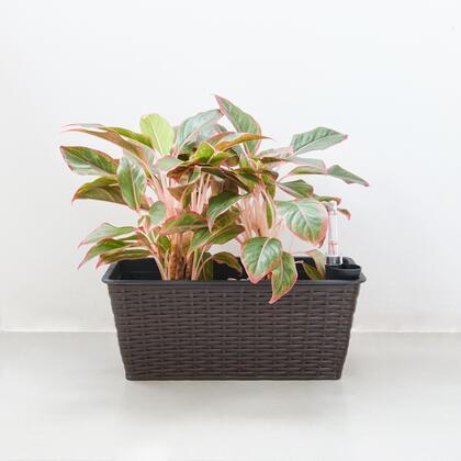 Vifah Yaddo V1904 Planters and Flower Shelf Brown, Main Image